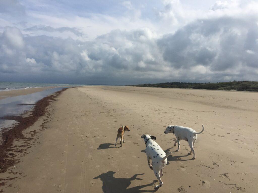 Et godt hundeliv er et hundeliv med fokus på hundes bevægelsesapparat og psyke