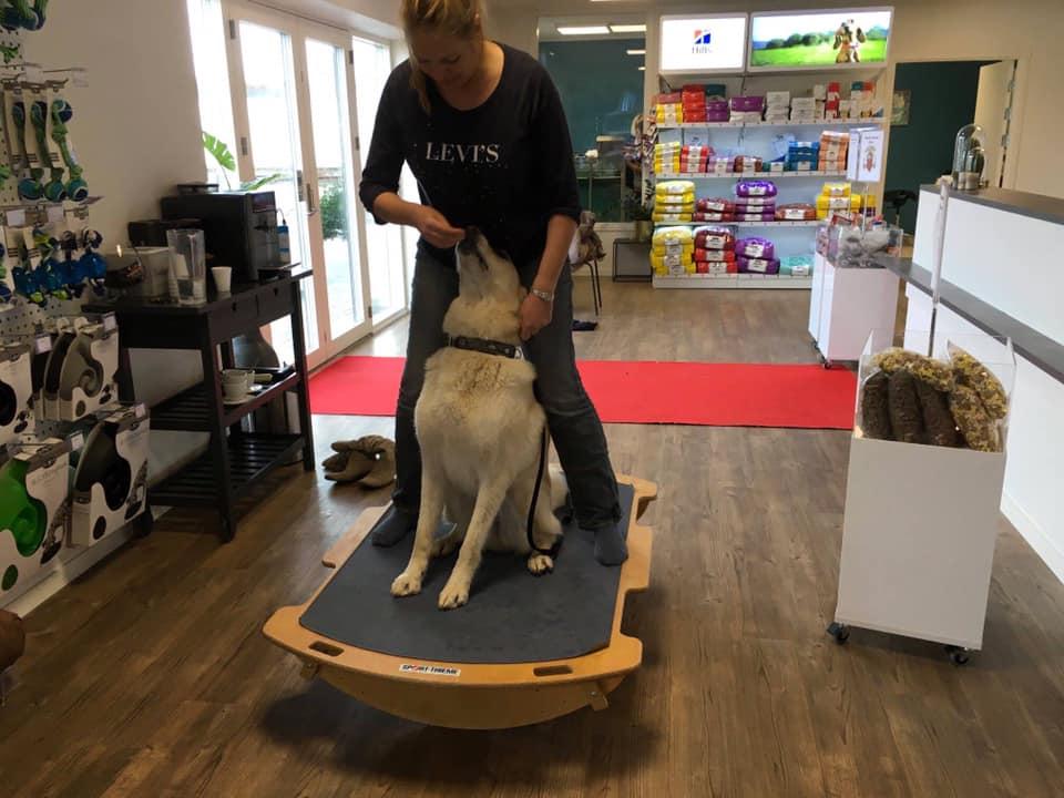 Hundefysioterapi